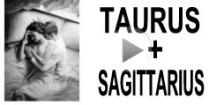 Taurus + Sagittarius Compatibility